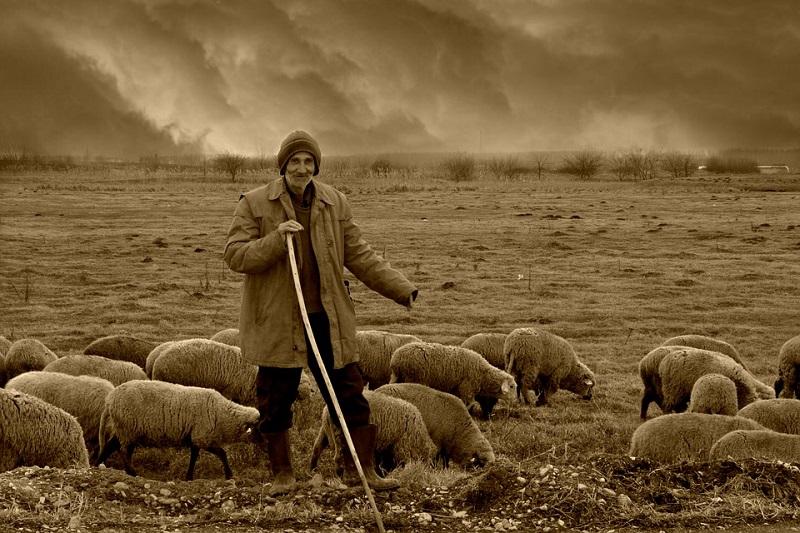СУСЕЧАНИ ПРОТИВ ПОШУМЉАВАЊА : Ако уништите – пашњак уништићете село