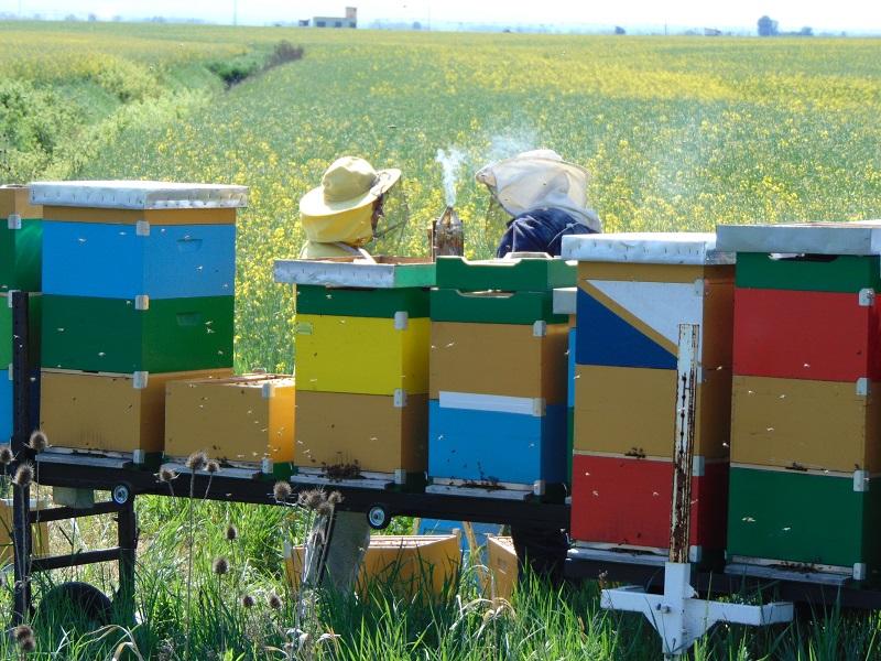 BESPLATNE EDUKATIVNE RADIONICE ZA PČELARE