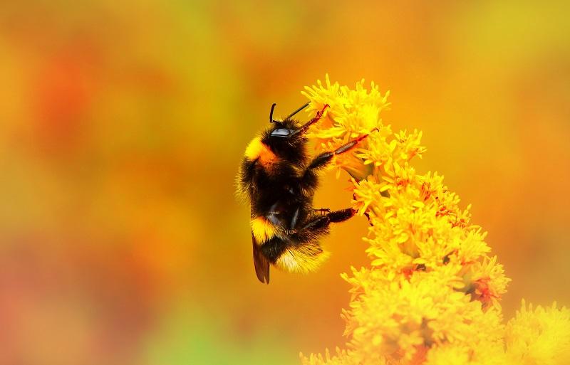 NOVA STRATEGIJA ZA OČUVANJE PČELA