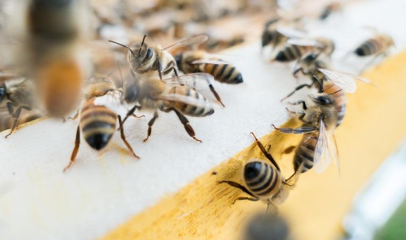 KADA JE POTREBNO UTOPLJAVANJE PČELA